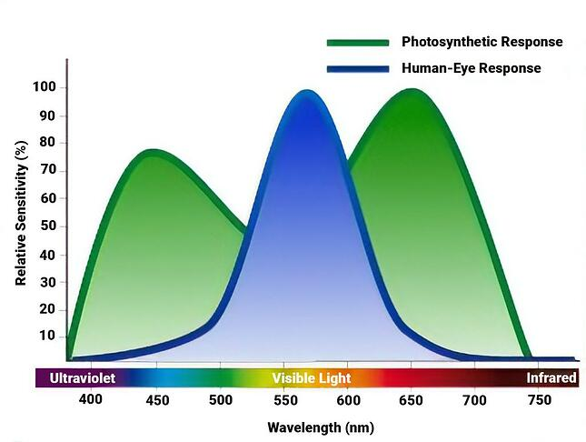 A waveform showing the response of Plants and Humans to different wavelengths of light