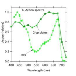 Graph showing the effects of the Action Spectrum of Light