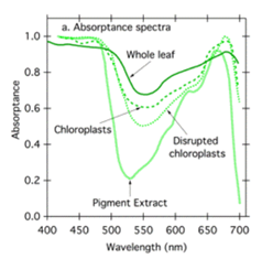 Graph showing the effects of the Absorption Spectrum of Light